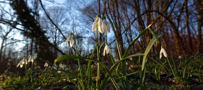 Kako živa bića prepoznaju proljeće