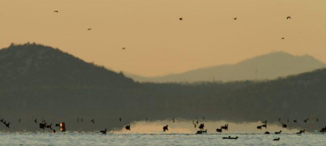 Vransko jezero – močvarno carstvo u Dalmaciji