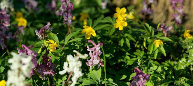 Proljetnice – šareni ukras naših šuma