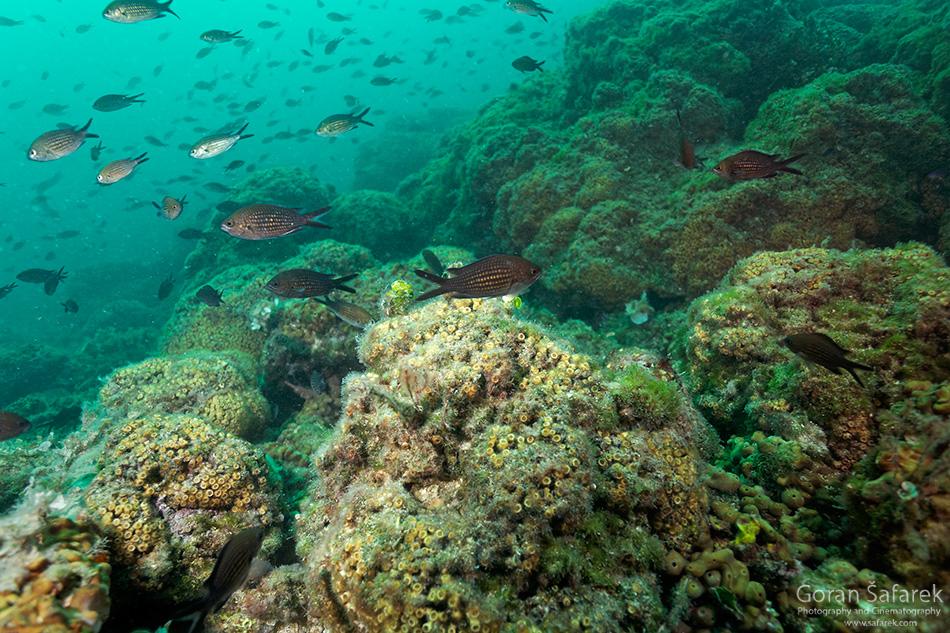 mljet, nacionalni park, jadransko more, tok,otoci, obala, jadran, kameni koralj, koraljni greben, veliko jezero