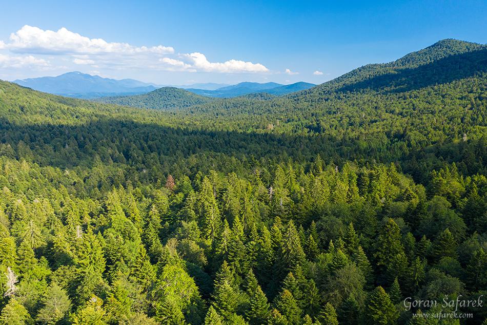 Čorkova uvala, prašuma, primarna šuma, plitvička jezera