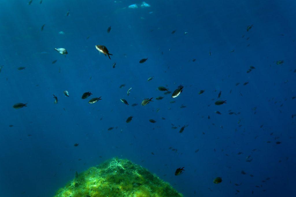 more, ribe, crnej, podmorje, jadransko more, jadran, ronjenje