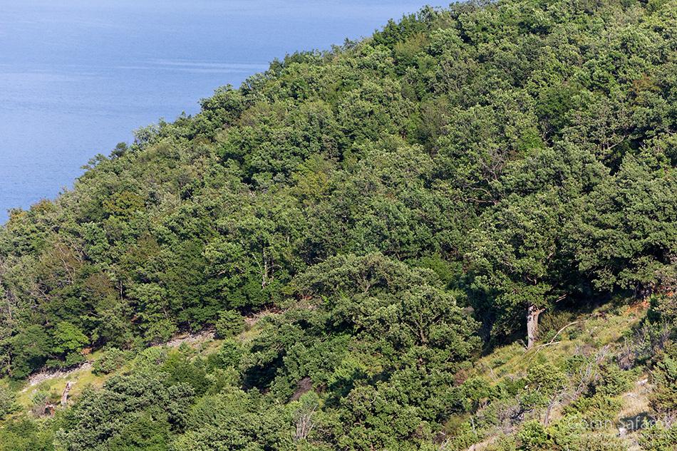 kvarner, otoci, jadran,jadransko more,obala, cres, tramuntana