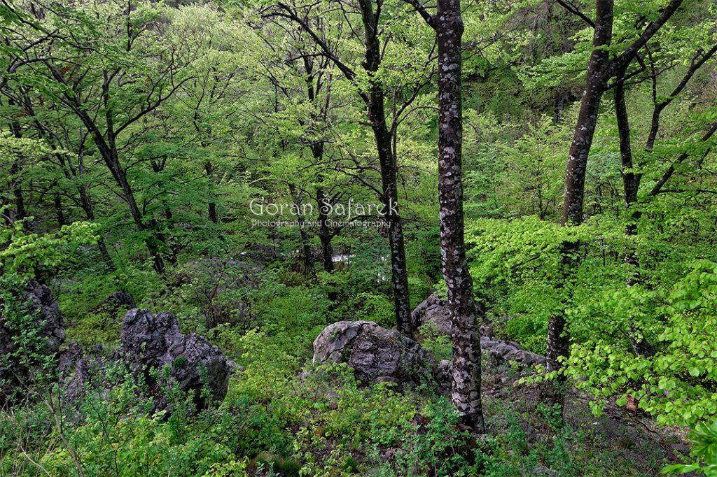 nacionalni park, paklenica, velebit, potok, rijeka,kanjon, šuma
