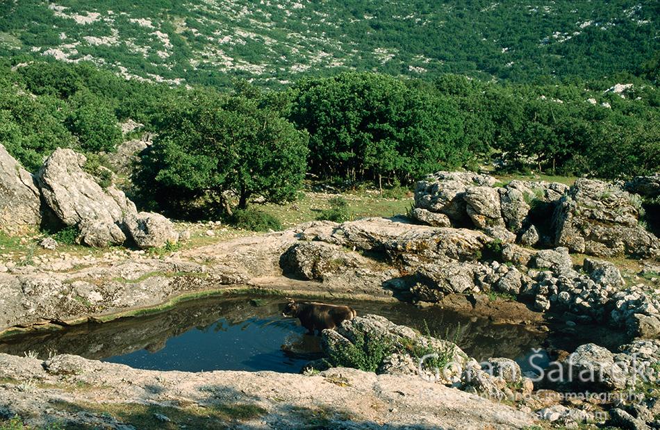 biokovo, park prirode, makarska, planine, lokva