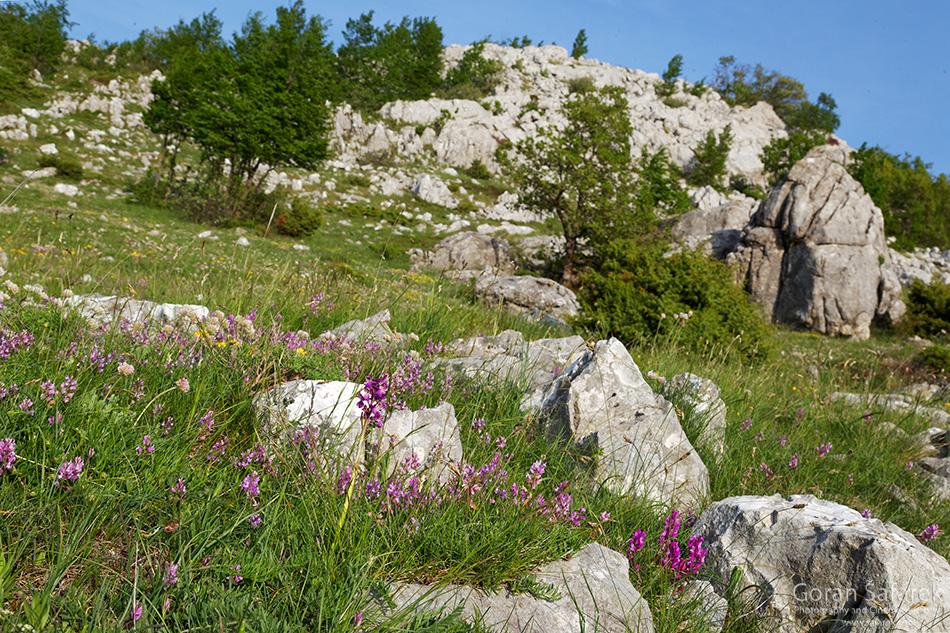 biokovo, park prirode, makarska, planine, orhideje, travnjak, krš