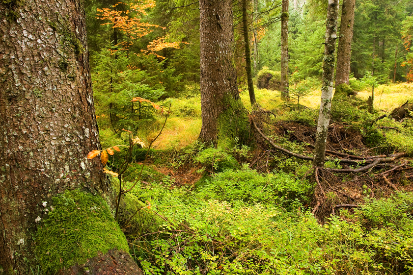 cret, močvara, sungerski lug, šuma, gorski kotar
