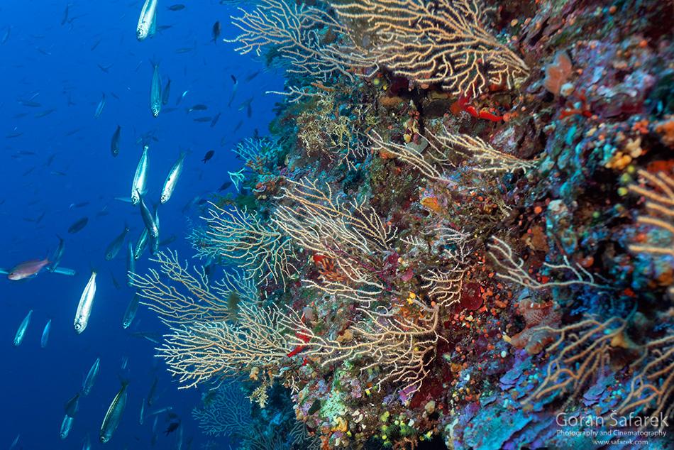 dubrovnik, krš, jadransko more, obala, jug,podmorje, gorgonije, koraligen