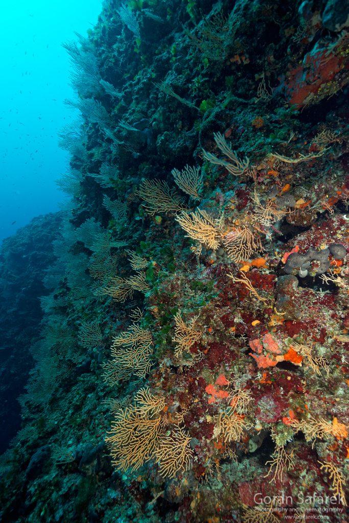 jadransko more, otok, kornati, koraligen, podmorje