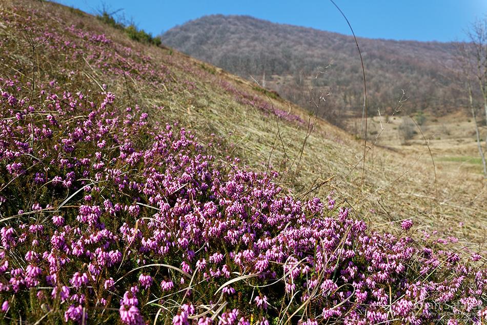 planine, priroda, Hrvatska,