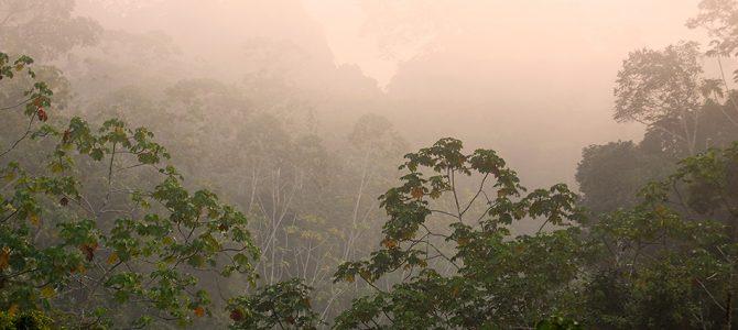 Prašuma ili džungla?