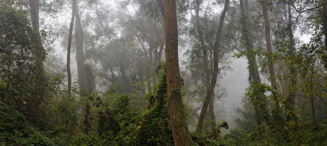 Hrvatske prašume