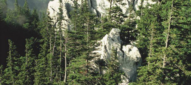 Smreka – kraljica stijena