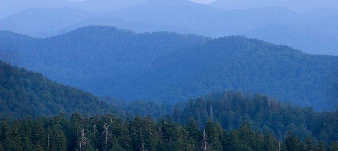 Jela – kraljica planinskih šuma