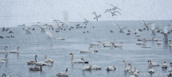 Zimovanje ptica na Šoderici