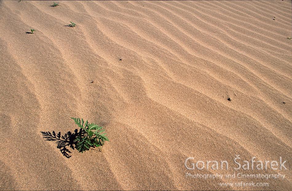 Podravski pijesci, hrvatska Sahara, đurđevački pijesci, peski, dina, pijesak