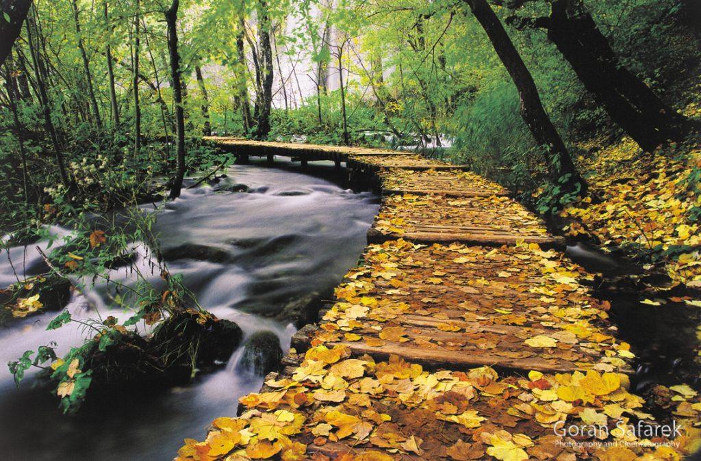plitvička jezera, nacionalni park, sedra, voda, sata, jesen