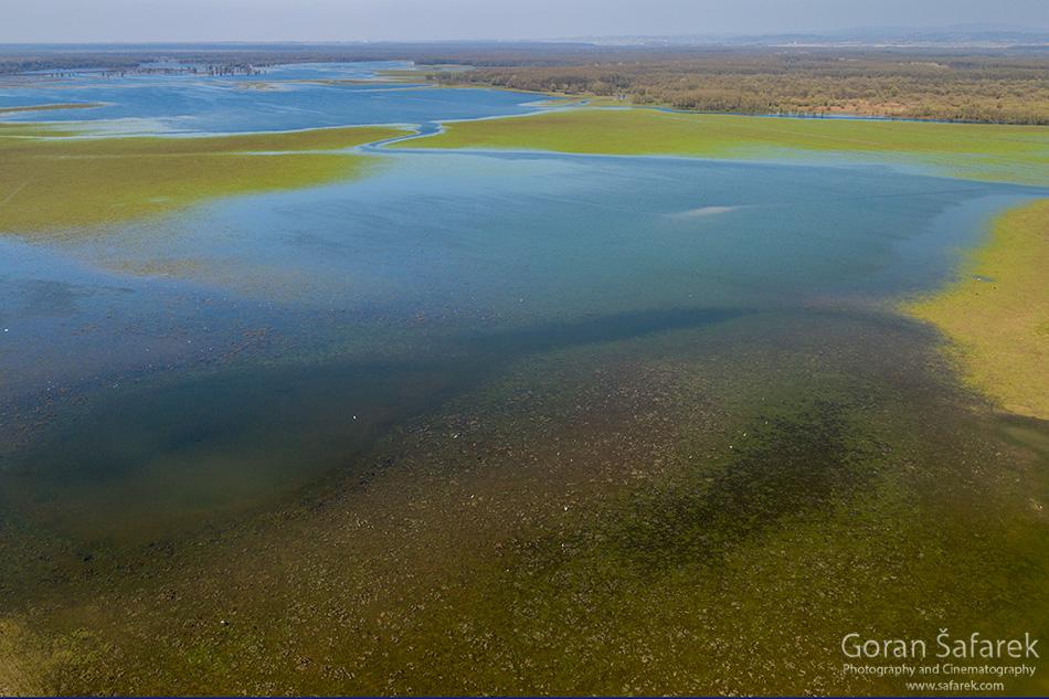 lonjsko polje, sava, poplava, popoalvno područje,