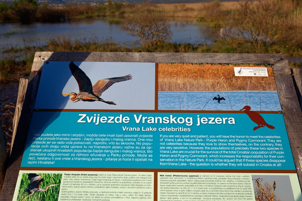 promatranje ptica, birwatching, birding, ptice, vransko jezero
