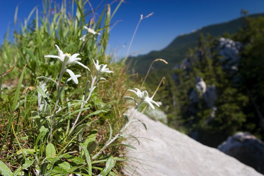 runolist, gorski kotar, šuma, planine, hrvatska, oblaci, priroda