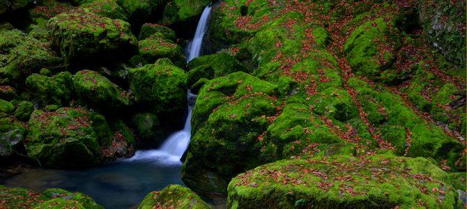 Mahovine – zeleni tepih šuma i rijeka
