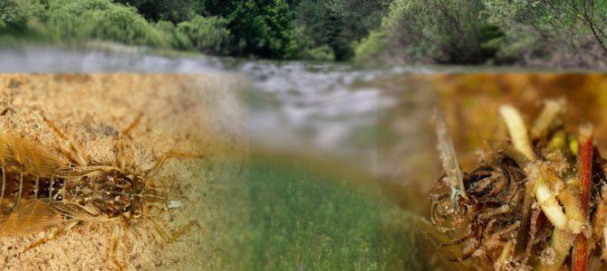 Ličinke kukaca u vodi